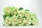 Krypton Florist Selection