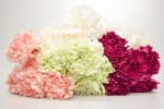 Carnations 5-pack